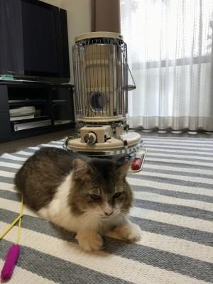 アラジンストーブと猫